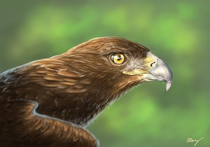 17. Golden Eagle náhled