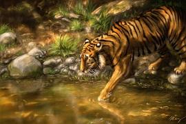 29. Tygr náhled