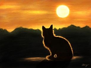 Kočka sunset-náhled