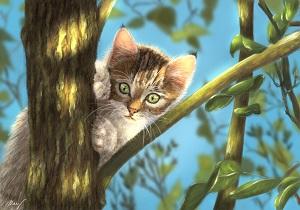 Kotě-náhled