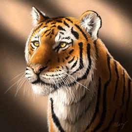 Tygr-náhled