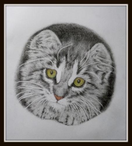 kočka 3 g
