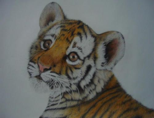 tygře 1 i